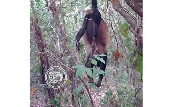Fauna no resiste altas temperaturas del sur de Veracruz
