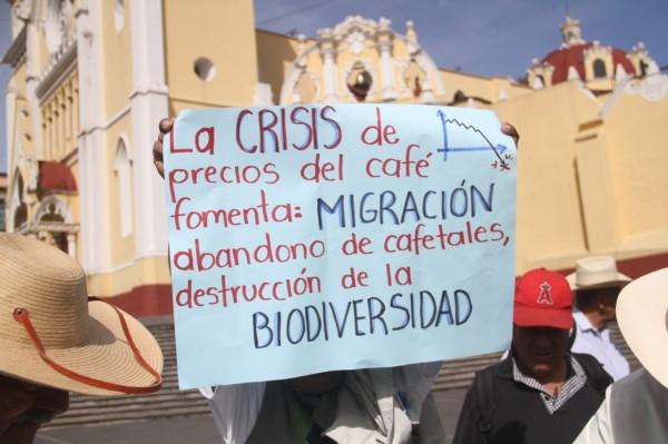 Bajo precio del café alienta cambio de cultivos y migración en Veracruz