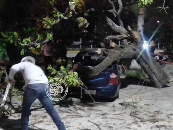 Tras fuertes vientos, cae árbol en Veracruz