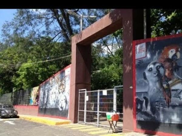 Desaparece guacamaya en parque Viveros en Veracruz