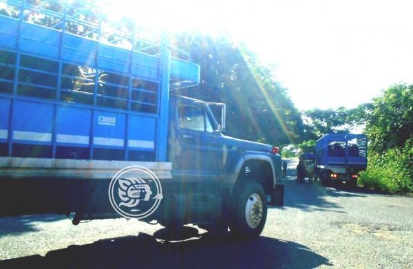 SSP intenta frenar abigeato en la sierra de Soteapan