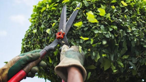 Serán sancionados aquellos que poden en exceso los árboles: Ecología